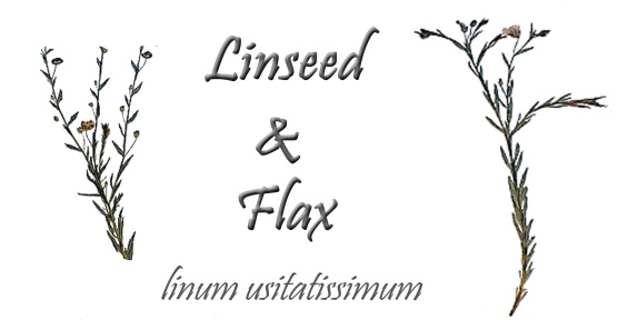 Linseed and Flax Plant