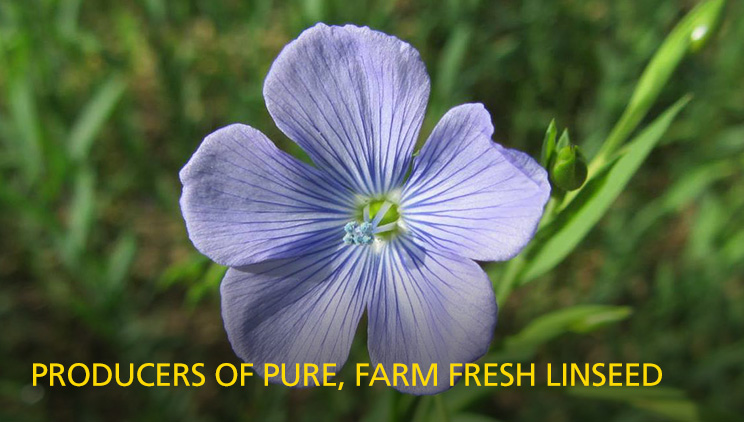 Producers of pure, farm fresh linseed