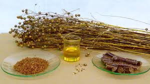 Linseed Flaxseed Oil Nuts Stook
