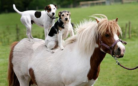 horse farm pets dogs adult